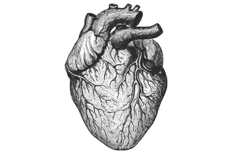 3 Key Supplements for a Healthy Heart