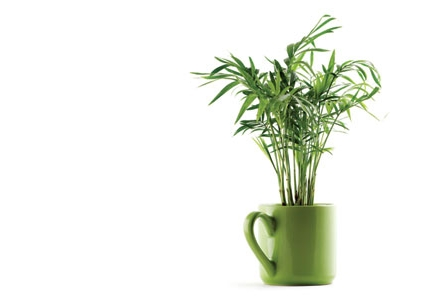 The Best Holiday Houseplants