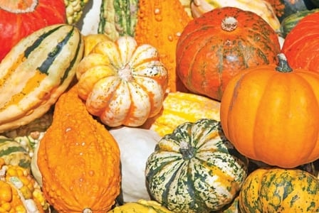Organic Week: October 15-22