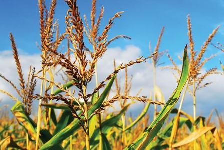 Corn Kernels of Truth