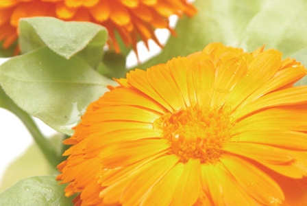 Herbal Sunshine