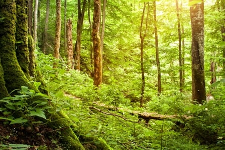 Celebrate our Forests on World Forestry Day