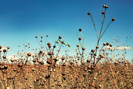 Fabulous Flax