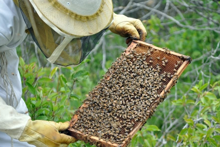 Insecticides May Be to Blame for Honeybee Deaths