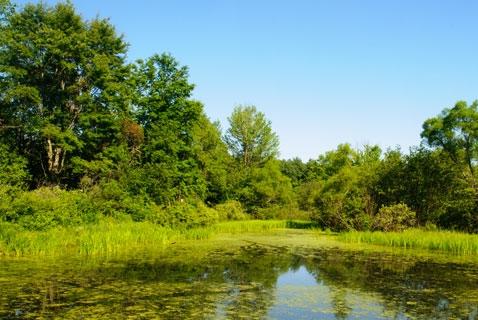 It's World Wetlands Day