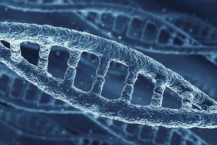 Telomere Length and Ageing