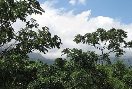 The Children's Eternal Rainforest