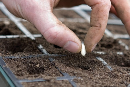 Let Us Consider What to Plant