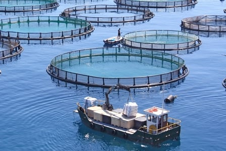 Another reason to avoid farmed fish