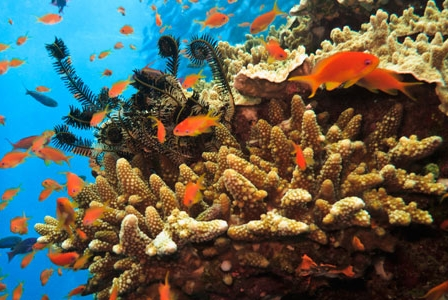Australia takes measures to preserve the Coral Sea