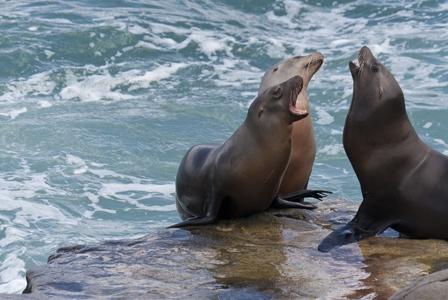 Wildlife Wednesday: California Sea Lion