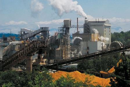 Pulp Mill Sludge