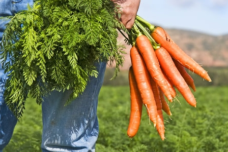 Richmond, BC, Bans the Growth of GM Crops