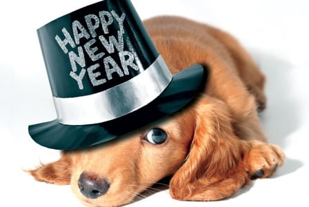 New Year's Furry Resolutions