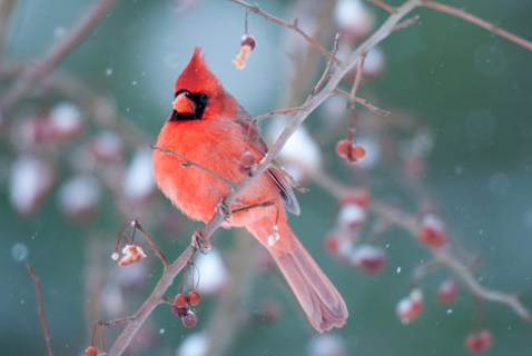 Teach Your Kids about Nature this Weekend with the Great Backyard Bird Count