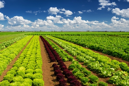 Good and Bad News for North American Crop Diversity