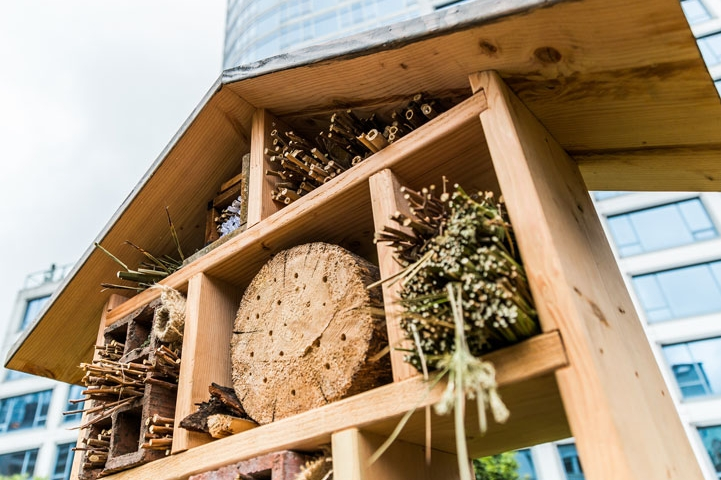 Bee hotels? Whatever next!