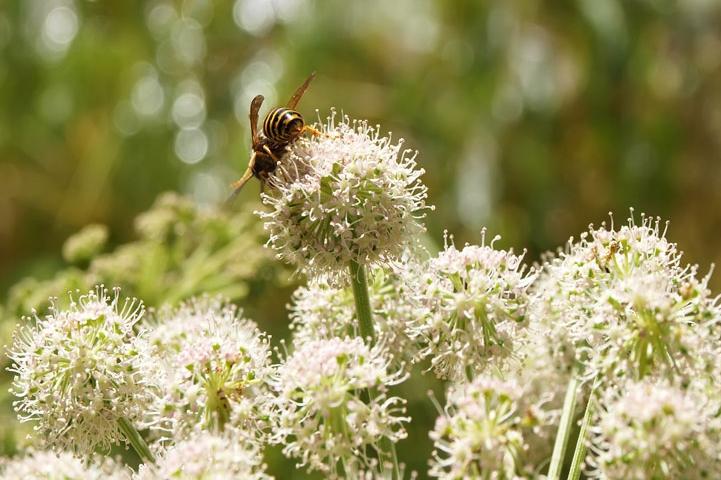 Plant a Pollinator-Friendly Garden