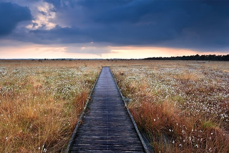 Help Protect Our Bogs