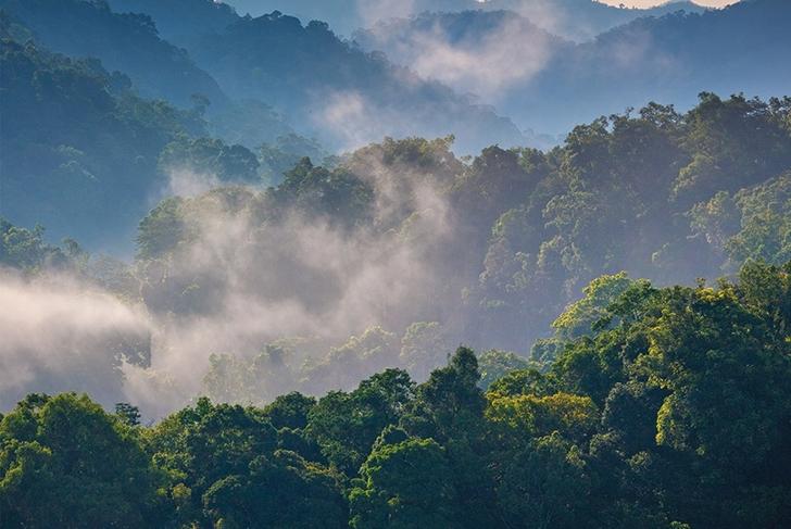 Preserving Nature's Pharmacy