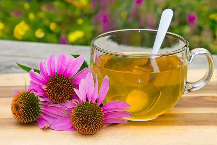 Cup of herbal tea from echinacea used in alternative medicine a an immun sytem booster.