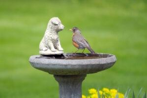 E-news-Mar1-birdbath