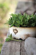 7 Natural Treatments for Seasonal Allergies