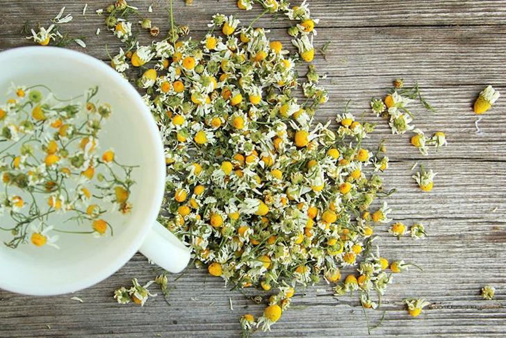 Natural sleep aids: camomile tea