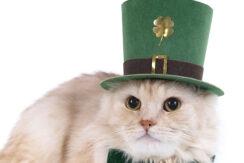 E-news-Mar15-Cat-Prechaun-1000x542