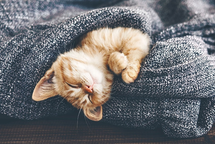 3 Natural Sleep Aids to Calm Your Busy Mind