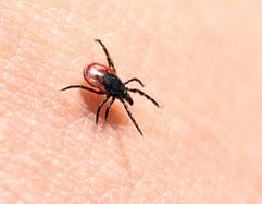 The Growing Threat of Lyme Disease - Additional Resources