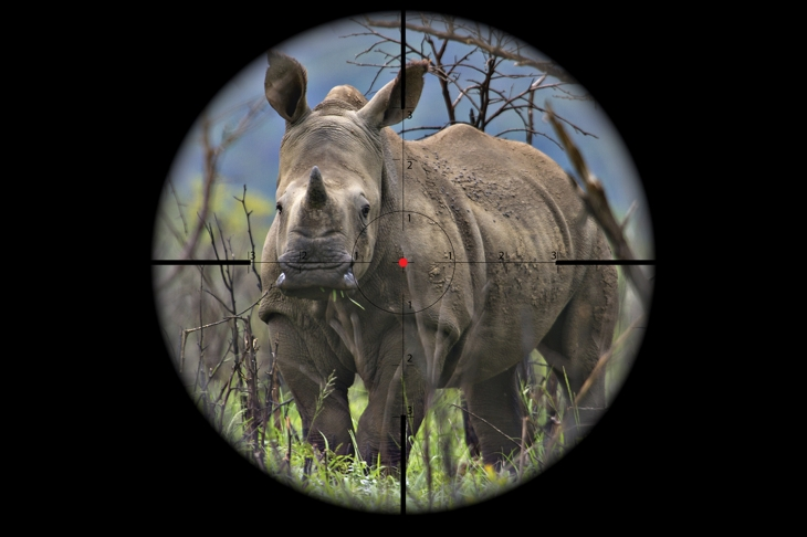 Rhinos on the Run