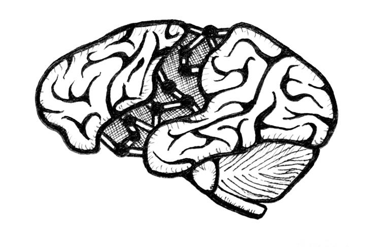 Neuroplasticity Stretches Brainpower