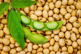 Protein Priorities: Are Lectins the New Gluten?