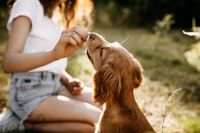 Natural Foods for Cats and Dogs