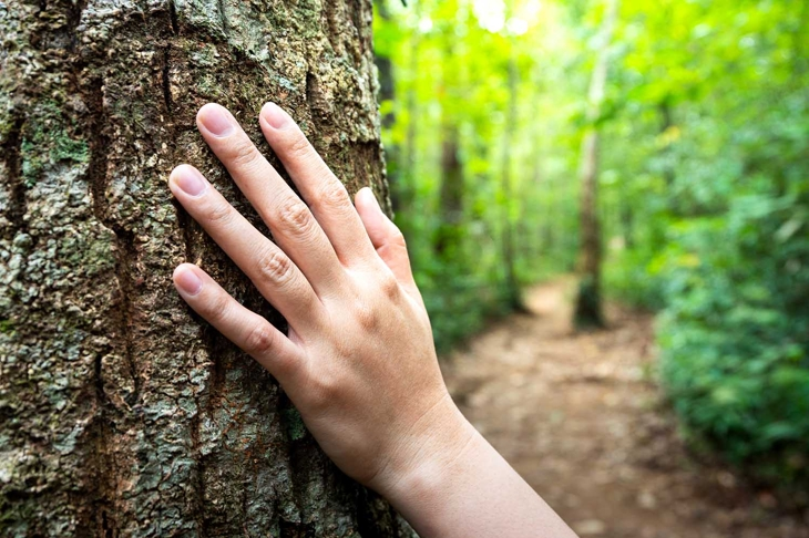 Human hand placed on the tree's trunk with background of dirt route into the forest. Adventure travel or loss in the jungle concept photo.