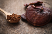 The Healing Power of Chaga and Reishi
