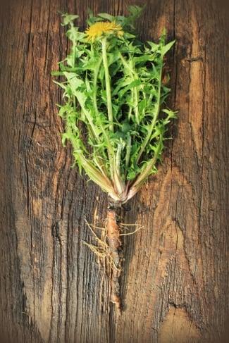 How to Roast Dandelion Roots