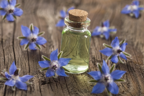 Borage Oil: The Inflammation-Fighting Superstar