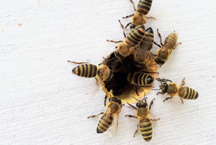 Bee a Honeybee Supporter