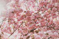 Cranking The Heat On Seasonal Allergies