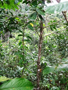 Diversity of the rainforest