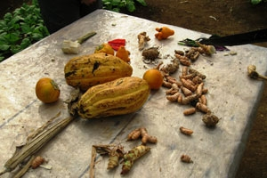 Fruits of the farm (cacao, ginger, and turmeric)