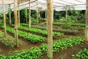 Herb and vegetable garden