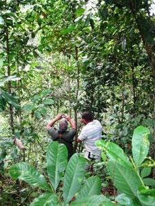 Replanted rainforest