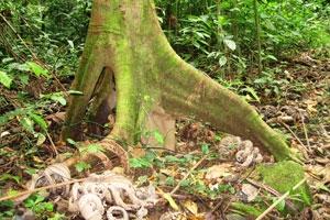 Tree roots