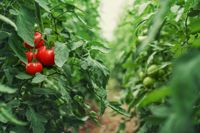 10 Things You Should Know About Companion Planting