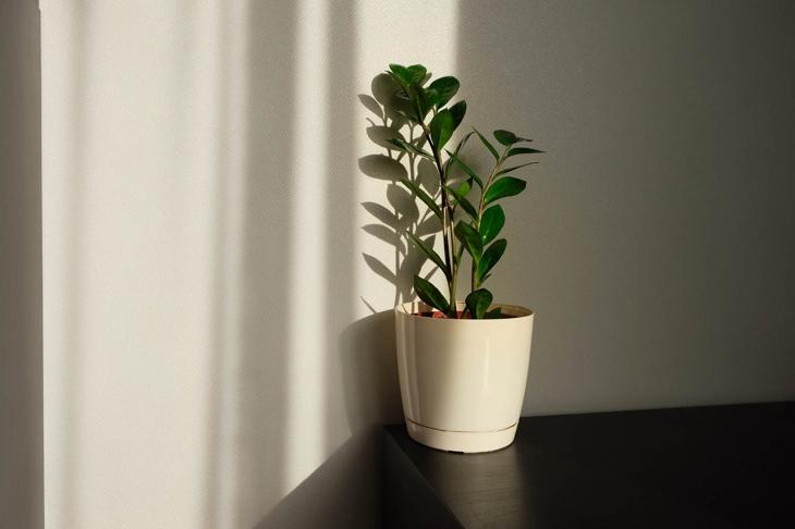 Indoor Plants: A Breath of Fresh Air