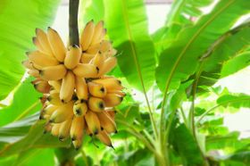 10 High-Potassium Foods That Won't Drive You Bananas