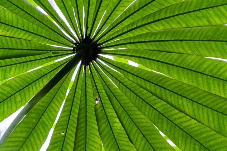 Seeking shade under green leaves. Saw palmetto shot from below